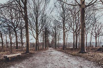 Entwaldung auf dem Gut Visdonk (Roosendaal, Brabant) von Fotografie Jeronimo