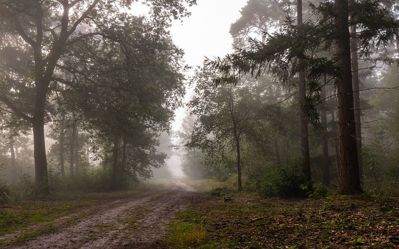 Forest Path Into The Mist van William Mevissen