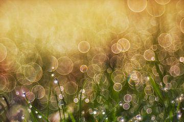 die Morgensonne und der Tau von Daniela Beyer