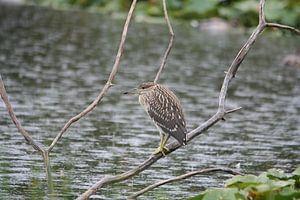 Verstopte Vogel van