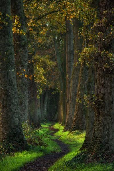A very fair fairy once told me, they do exist van Lars van de Goor