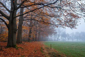 Laatste bladeren van de herfst