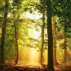 Wald Wandbilder