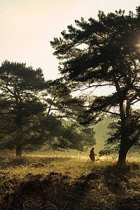 Ochtendwandeling in het bos. van