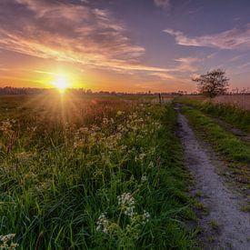 Sunburst De Onlanden met pad en boom van R Smallenbroek