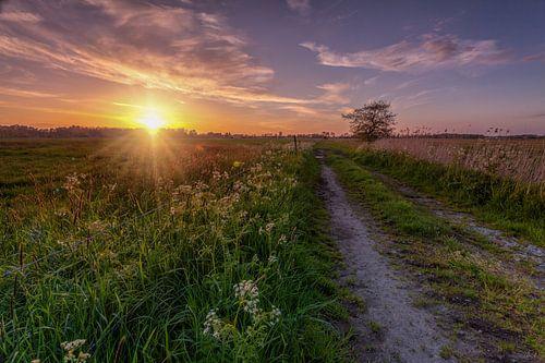 Sunburst De Onlanden met pad en boom