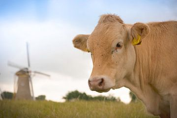 Holländische Windmühle mit Kuh von Jolanda van Straaten