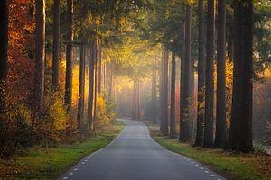 The golden light of fall van