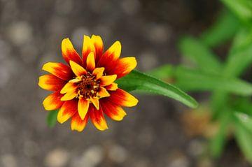 Blume 1 von Sigrid Olschinski