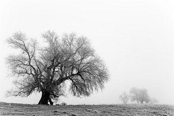 Wilg in een winters landschap van Irene Damminga