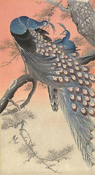 Twee pauwen op boomtak, Ohara Koson - ca. 1900