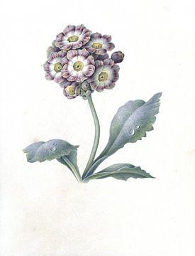 Florale Studie von Maria Margaretha van Os, 1823