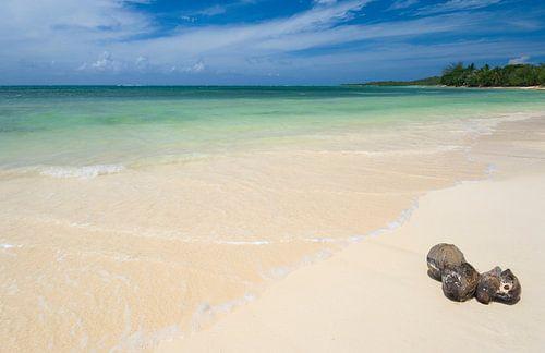 Strand met Cocosnoten van