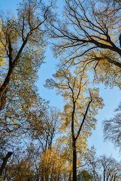 Baumwipfel im Herbst vor blauem Himmel von Ad Jekel