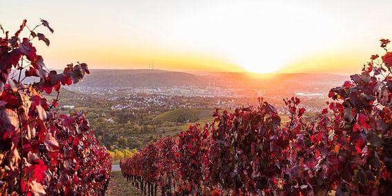 Weinbau in Stuttgart