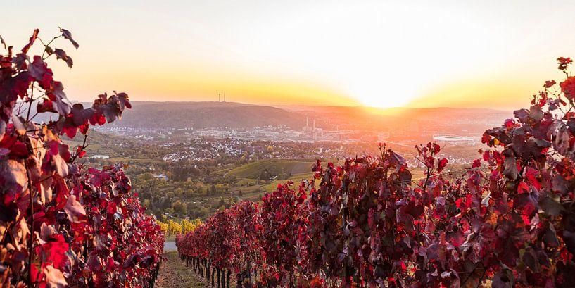Weinbau in Stuttgart von Werner Dieterich