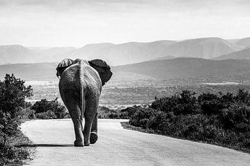 Elefant überquert die Straße von Carmen de Bruijn