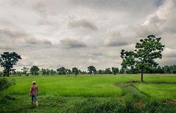 Sukhothai rijstvelden in Thailand van