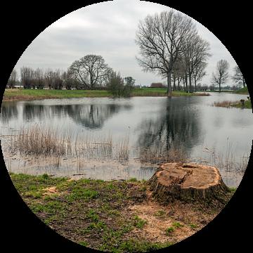 Omgezaagde boom van Ruud Morijn