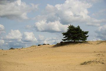 Book op duinen