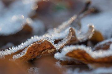 bevroren bladeren van Tania Perneel