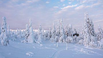 Winter von Rob Honing