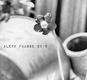 SHAMROCK FLOWERING BW (ALEXX FAASSE, 2016) van Alex Faasse