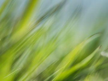 herbe sur Hennie Zeij