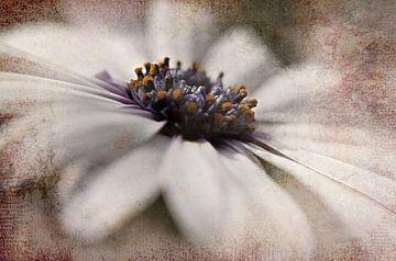 Blütenweiß von Claudia Gründler