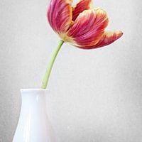 Stilleven collectie - Van klassieke taferelen en verstilde landschappen, tot aan detailfoto's van planten. Met een stilleven kun je qua stijl alle kanten op. Kies een werk dat bij je past, en breng rust in je huis of kantoor.