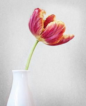 Tulp#4 van