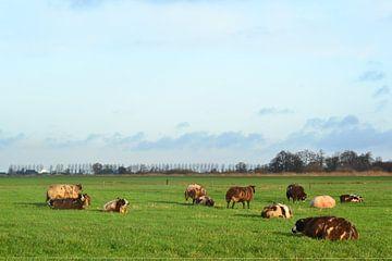 Schafe auf dem Ackerland, Doezum, Groningen von Mark van der Werf