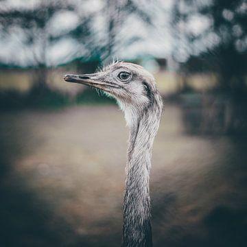 emu von Bjorn Brekelmans