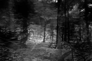 Serie verloren gevoel, beeld 2 van Noortje Zoomers
