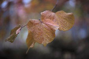 Laatste blaadjes van de herfst van Gerhard Hoogterp