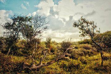 Dünenlandschaft Herbst von Shirley Douwstra