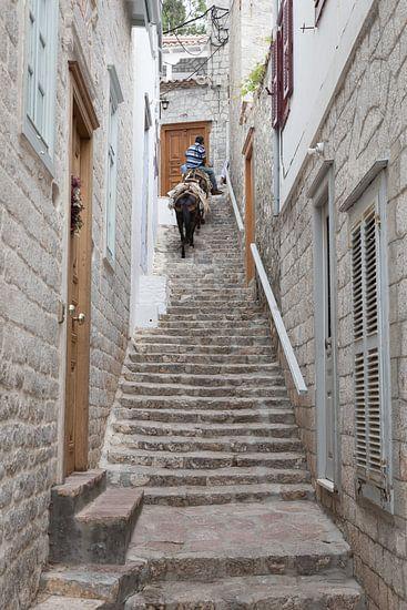 Ezel op de trap
