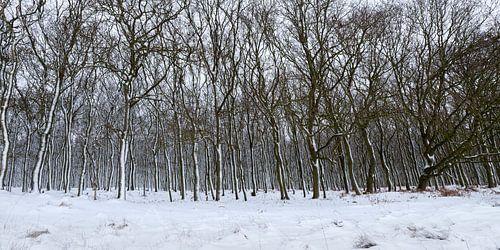 Bomen in de sneeuw van Richard Guijt