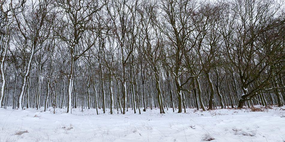 Bomen in de sneeuw