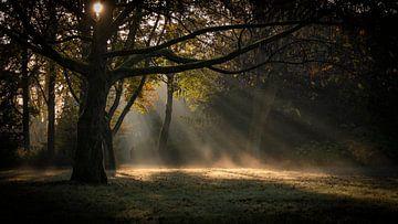 Nebel und Sonnenstrahlen von Noud de Greef
