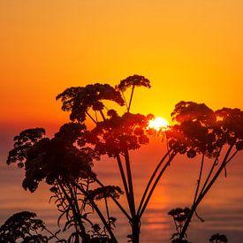 Plantensilhouet in de zonsondergang aan zee van Frank Herrmann