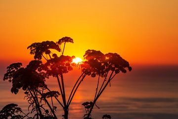 Plantensilhouet in de zonsondergang aan zee