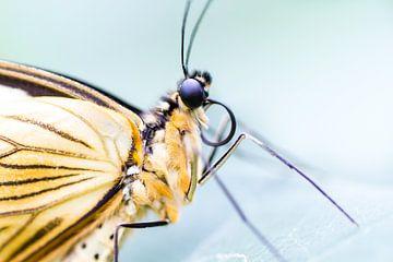 Rockstar butterfly van Qeimoy