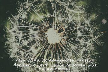 Pusteblume - Warten auf den Wind von Christine Nöhmeier