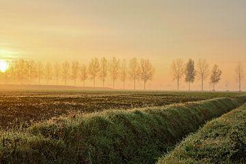 Ochtendmist met zonsopkomst von Saskia Smulders
