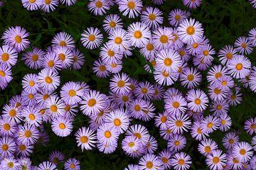 Blütenteppich von Thomas Jäger