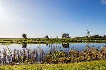 Nederlands landschap weiland van Déwy de Wit