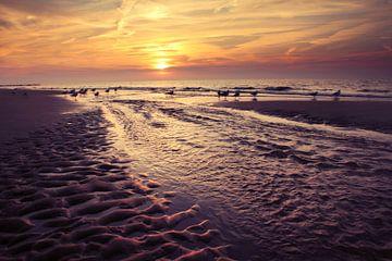 meeuwen op het strand bij Domburg ( zonsondergang)  van Els Fonteine