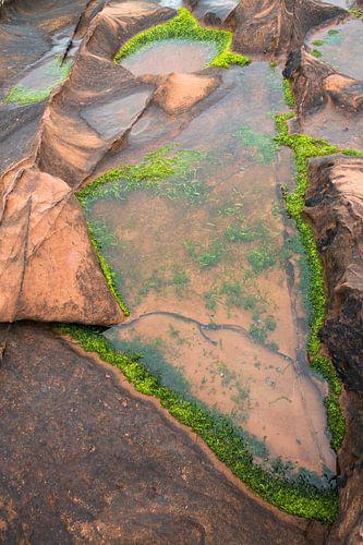 Waterplanten op rotsen