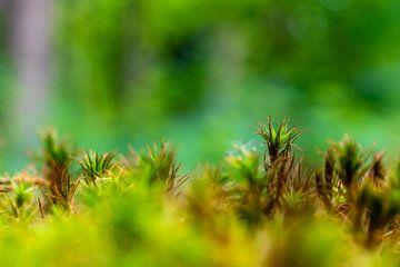 Een bos van mos van Mickéle Godderis